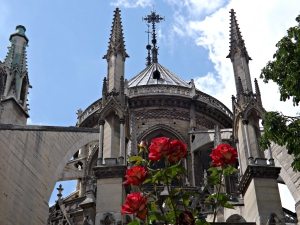 Notre Dame en rose